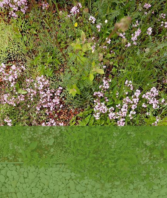 pflanzungen-mit-transparent